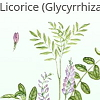 Licorice and Allergies