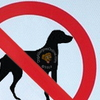 Allergic to Dogs Prevention | Communication, Boundaries and Other Considerations