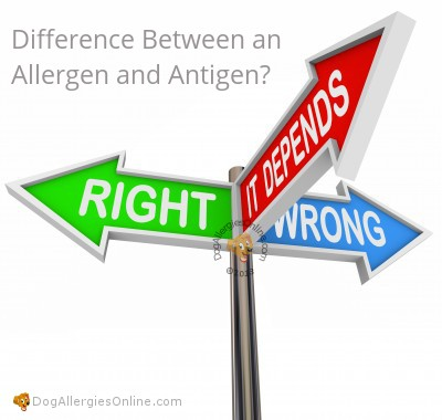 Allergens, Antigens and Allergies