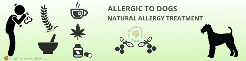 Allergic to Dogs Natural Allergy Treatment