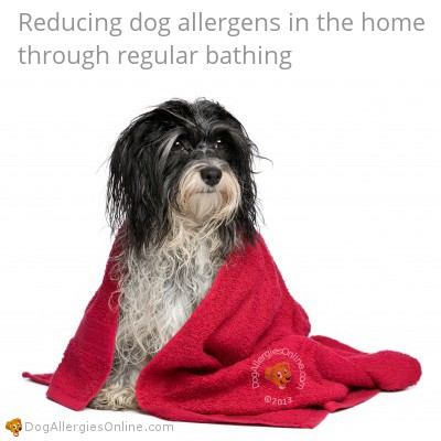 Allergic to Dogs Prevention - Dog Bathing