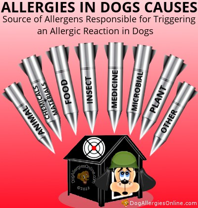 Allergies in Dogs Causes - Allergen Source