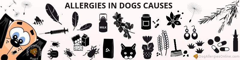 Allergies in Dogs Causes