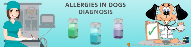 Allergies in Dogs Diagnosis