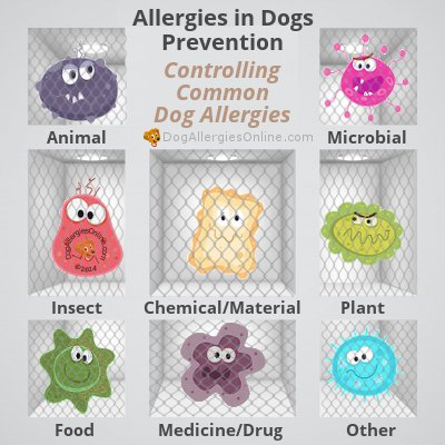 Allergies in Dogs Prevention - Controlling Common Dog Allergies