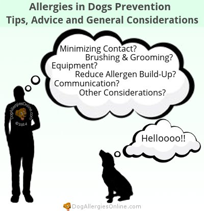 Allergies in Dogs Prevention - Tips, Advice and General Considerations