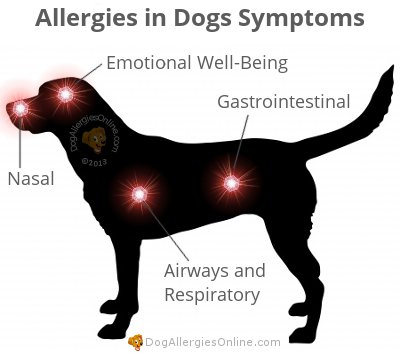 Allergies in Dogs Symptoms - Airways, Gastrointestinal, Nasal and Emotional Well-Being