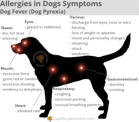 Can Food Allergies Cause Vomiting In Dogs