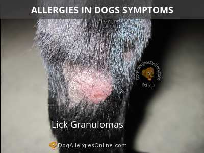 Allergies in Dogs Symptoms - Lick Granulomas