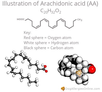 Arachidonic Acid and Allergies