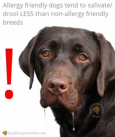 Characteristics of an Allergy Friendly Dog