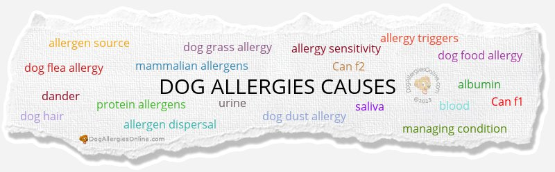 Dog Allergies Causes