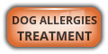 Dog Allergies Treatment