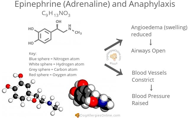 Epinephrine (Adrenaline) and Anaphylaxis