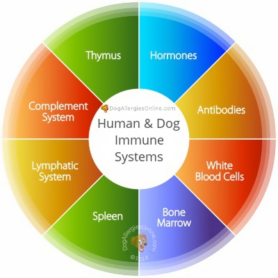 Human and Dog Immune Systems