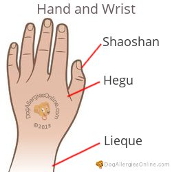 Nasal Congestion, Sinus Pressure and Acupoints - Hand and Wrist