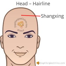 Nasal Congestion, Sinus Pressure and Acupoints - Head Hairline
