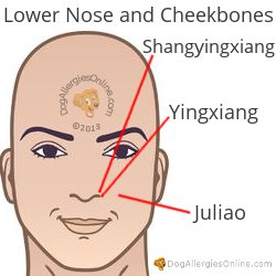 Nasal Congestion, Sinus Pressure and Acupoints - Lower Nose and Cheekbones