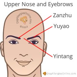 Nasal Congestion, Sinus Pressure and Acupoints - Upper Nose and Eyebrows