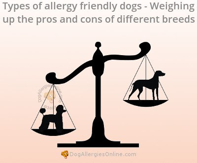 Types of Allergy Friendly Dogs - Pros and Cons