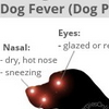 Allergies in Dogs Symptoms | Dog Fever (Dog Pyrexia)