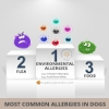 Most Common Allergies in Dogs - Facts and Statistics