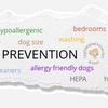 Dog Allergies Prevention
